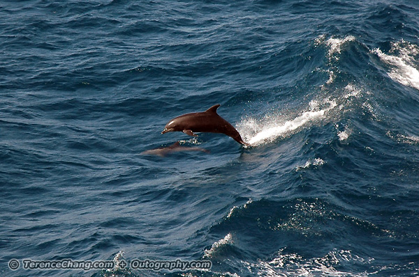 Wild Dolphin at Cabo San Lucas