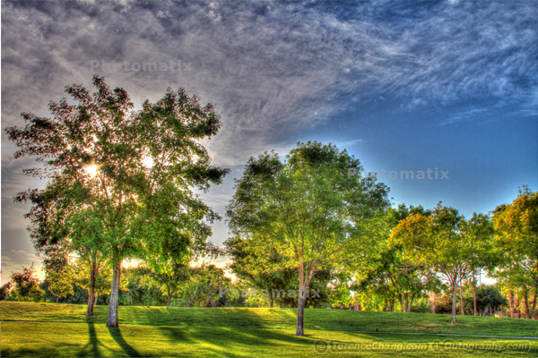 HDR Image – Trees