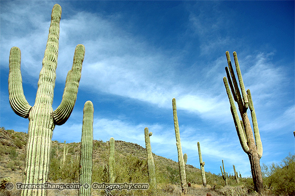Cactus at Go John