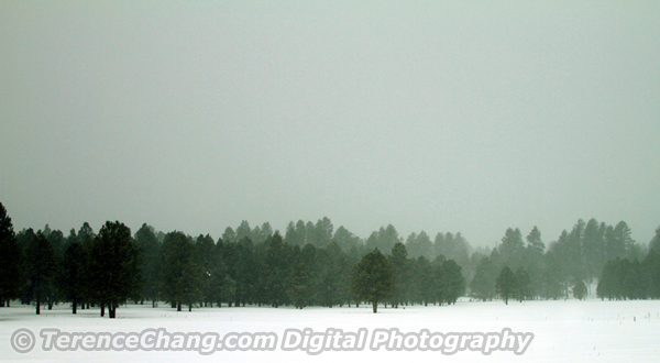 Snowing Flagstaff
