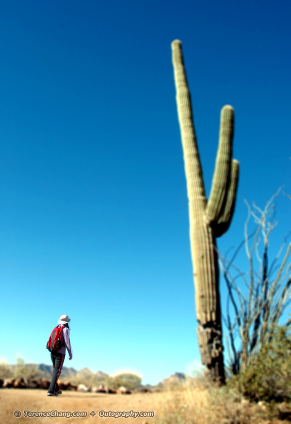 Giant Cactus Tilt-Shift Effect