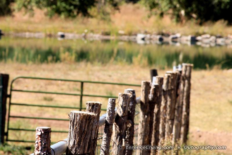 Cherry Creek Ranch Morning